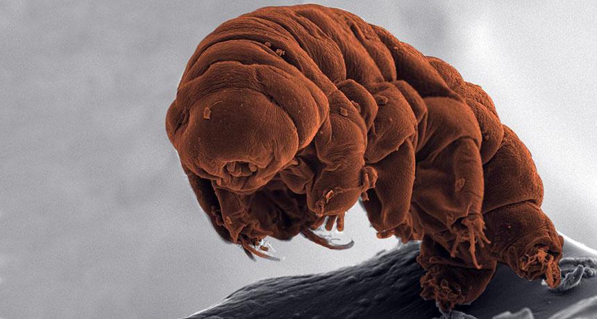 Ramazzotius varieornatus tardigrades have radiation protection gene